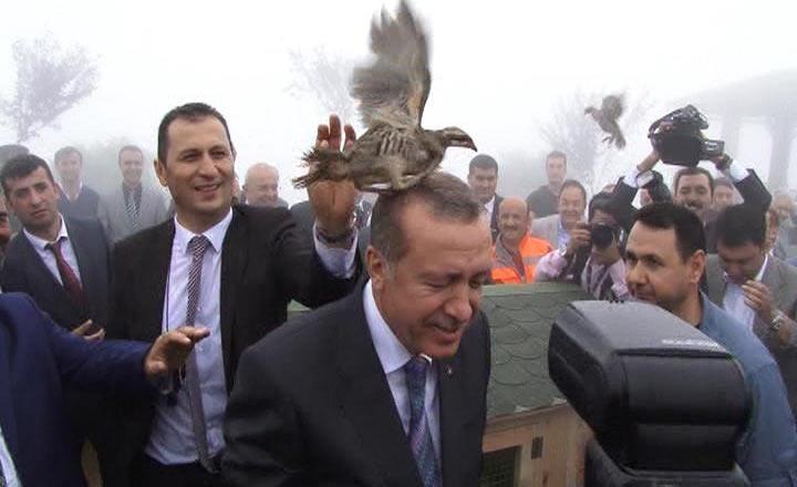 Rize'de Cumhurbaşkanı Erdoğan'ın başına keklik kondu 4
