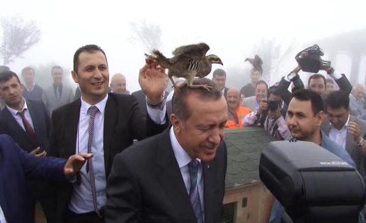 Rize'de Cumhurbaşkanı Erdoğan'ın başına keklik kondu 5