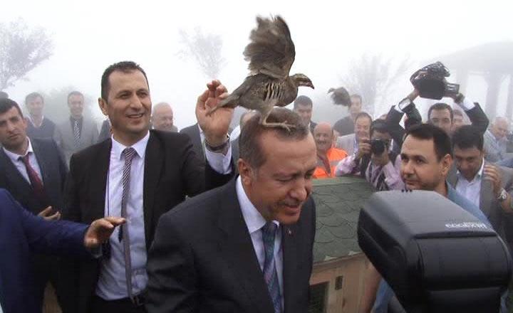 Rize'de Cumhurbaşkanı Erdoğan'ın başına keklik kondu 6