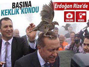 Rize'de Cumhurbaşkanı Erdoğan'ın başına keklik kondu