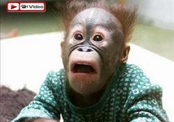 Bu maymunlar kahkaha makinesi