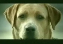 Köpeklerin reklam filmi!  VİDEO