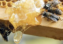 Arıcılar tek elden bal satacak