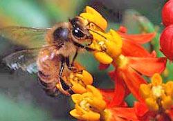 Arı sütündeki mucize