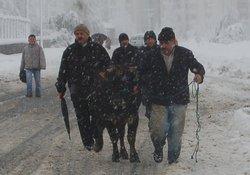 Rize'de kar, hayatı felç etti