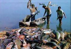 Balık yemek bir sanattır!