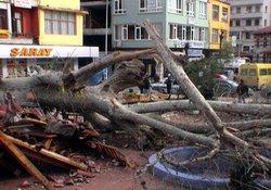 Yıkılan ağaç 10 gün emir bekledi!