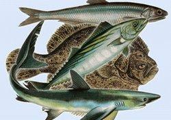 Karadeniz balıkçılığı nereye?