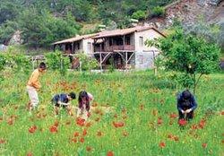 Yeni sektör: Organik tatil beldeleri