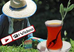 Yapraktan Bardağa Çay'ı izleyin