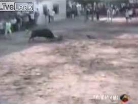 Matadoru boğadan köpek kurtardı!