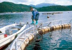 Kültür balıkçılığı gelişiyor