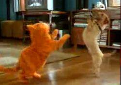 Garfield misket havası! İZLE