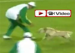 Futbol ile dalga geçen köpek
