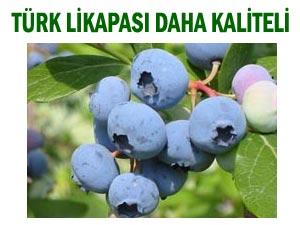 Türkiye'de Avrupa'dan daha iyi Likapa yetişiyor