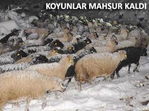 Mahsur kalan 250 koyun ve çobanı AFAD kurtardı