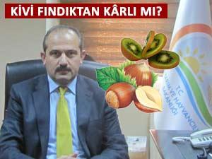 Fındıktan daha kazançlı. Trabzon kiviye dönüyor