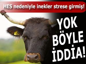 BARAJ İNŞAATI İNEKLERİ DEPRESYONA SOKMUŞ!