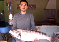 11 kiloluk kötek balığı yüz güldürdü