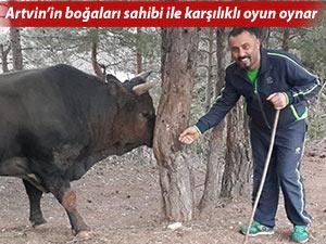 ARTVİN'İN BOĞALARI SAHİBİ İLE KARŞILIKLI OYUN OYNAR