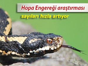 HOPA ENGEREĞİ İÇİN BÖLGEDE ÇALIŞMA BAŞLATILDI