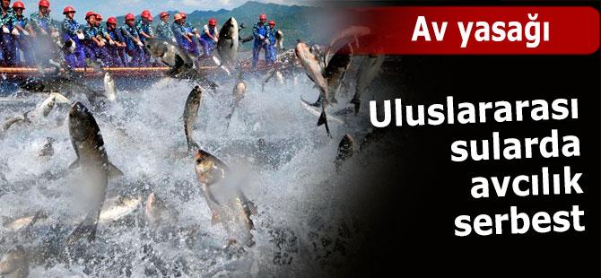 Uluslararası sularda avcılık serbest