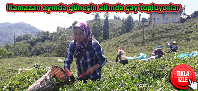 Ramazan ayında güneşin altında çay topluyorlar