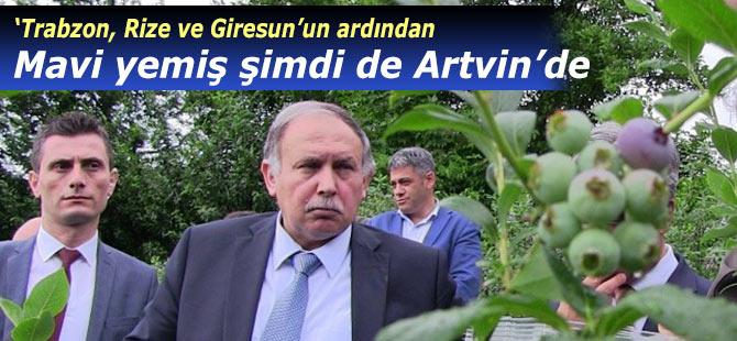 Mavi Yemiş üretimine Artvin'de de başlandı