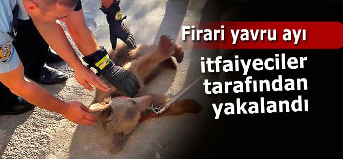Firari yavru ayı itfaiyeciler tarafından yakalandı