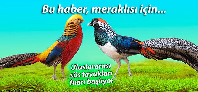 Uluslararası Süs Tavukları Fuarı düzenlenecek