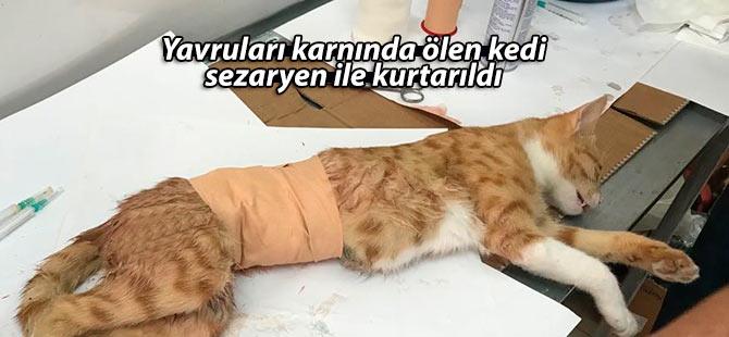 Yavruları karnında ölen kedi sezaryen ile kurtarıldı