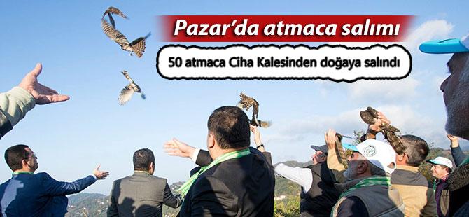 50 atmaca, Pazar Ciha Kalesinden doğaya salındı