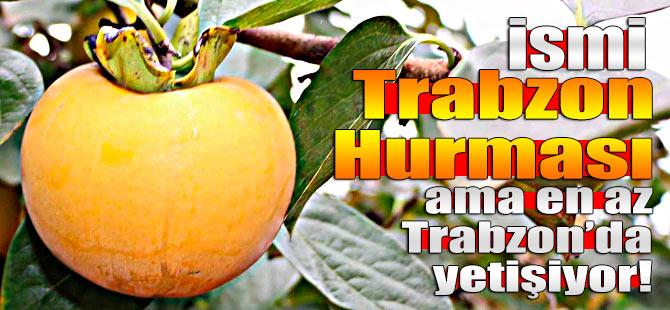 İsmi Trabzon hurması ama en az Trabzon'da yetişiyor!