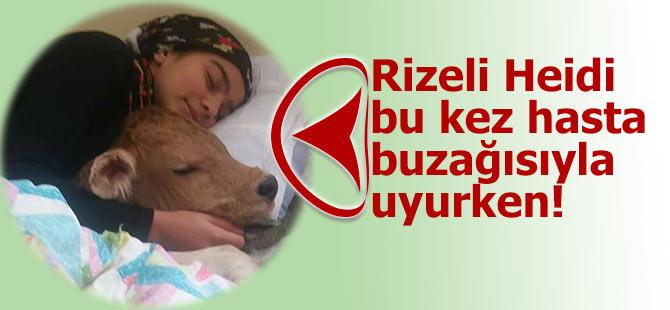 Rizeli Heidi bu kez hasta buzağısıyla uyudu!