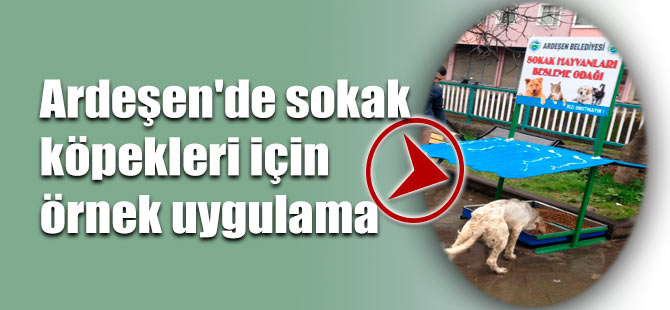 Ardeşen'de sokak köpekleri için örnek uygulama