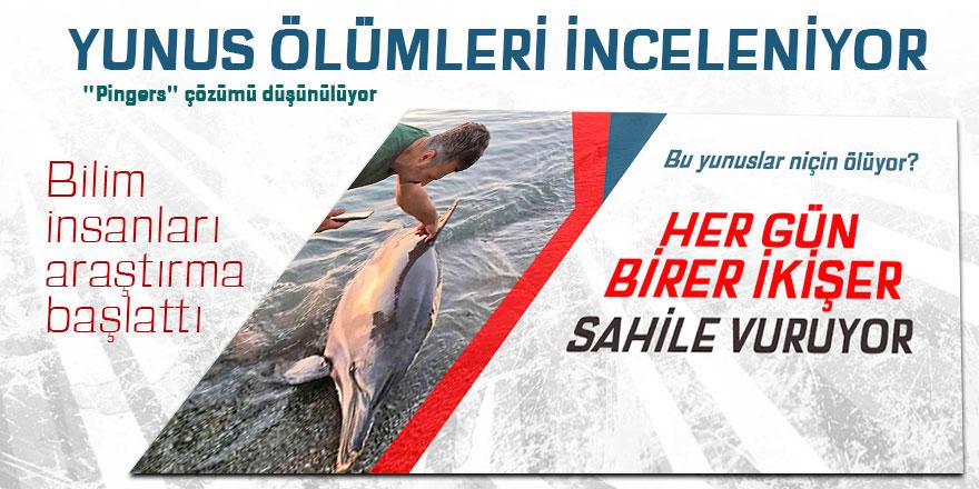 Ölü yunus balıkları bilim adamlarını harekete geçirdi
