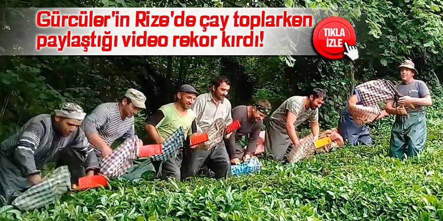 Gürcüler'in Rize'de çay toplarken paylaştığı video rekor kırdı!