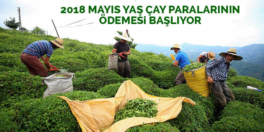 2018 Mayıs yaş çay paralarının ödemesi başlıyor