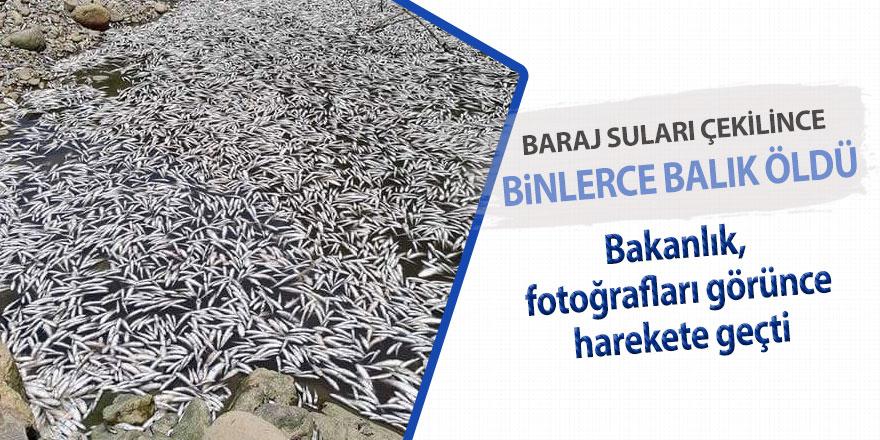 Baraj suları çekildi, balıklar öldü