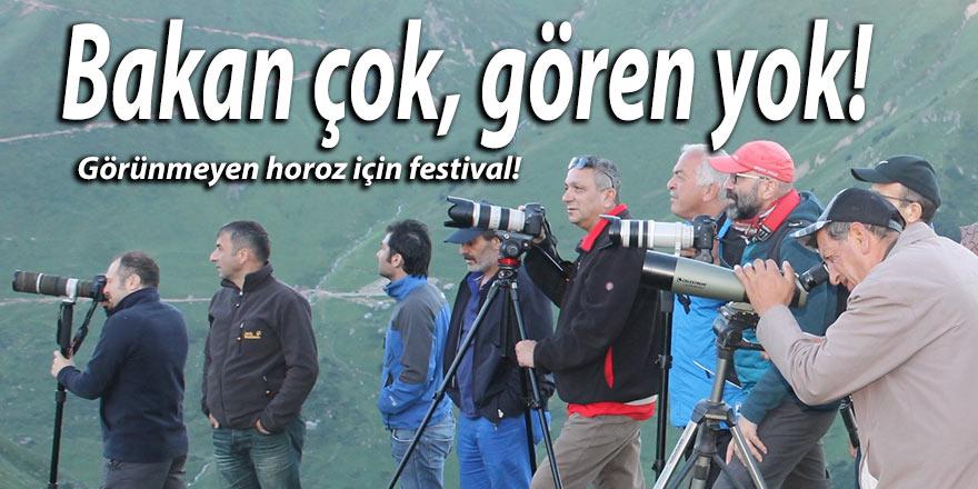 Görünmeyen horoz için festival!