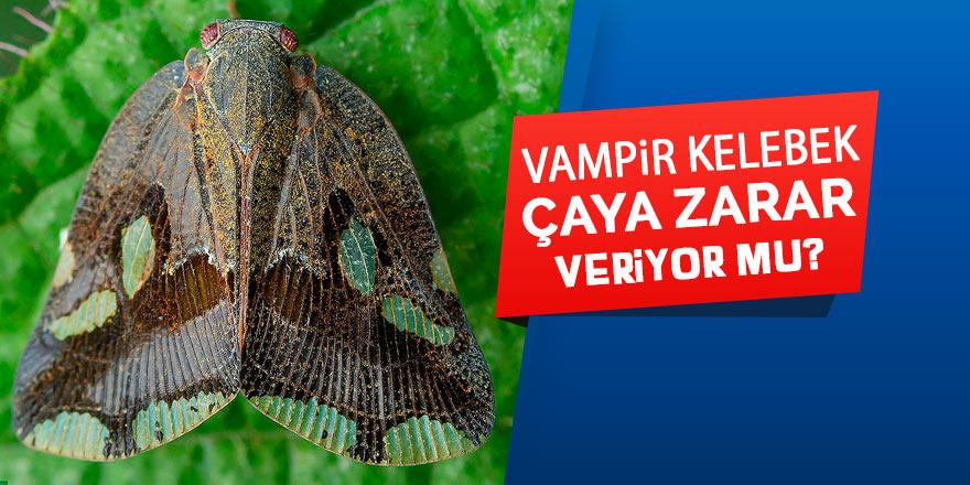 Vampir kelebek çaya zarar veriyor mu?