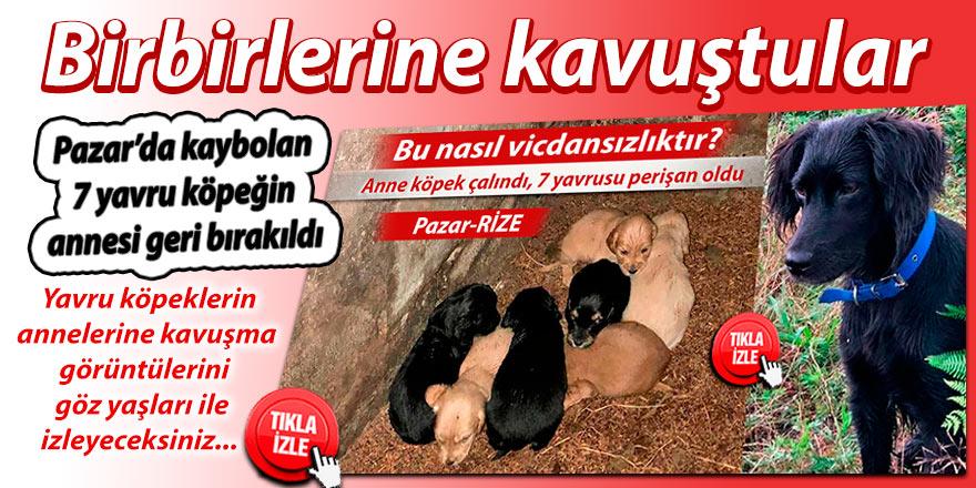 Pazar'da kaybolan 7 yavru köpeğin annesi geri bırakıldı!
