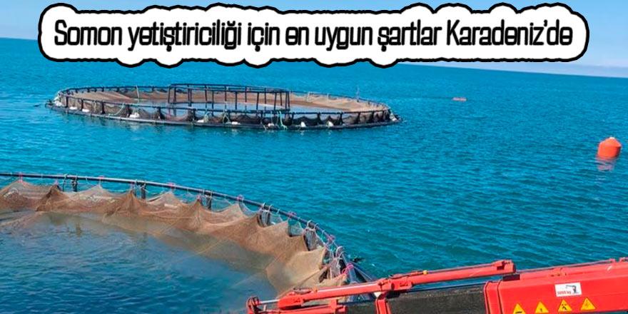 Somon yetiştiriciliği için en uygun şartlar Karadeniz'de