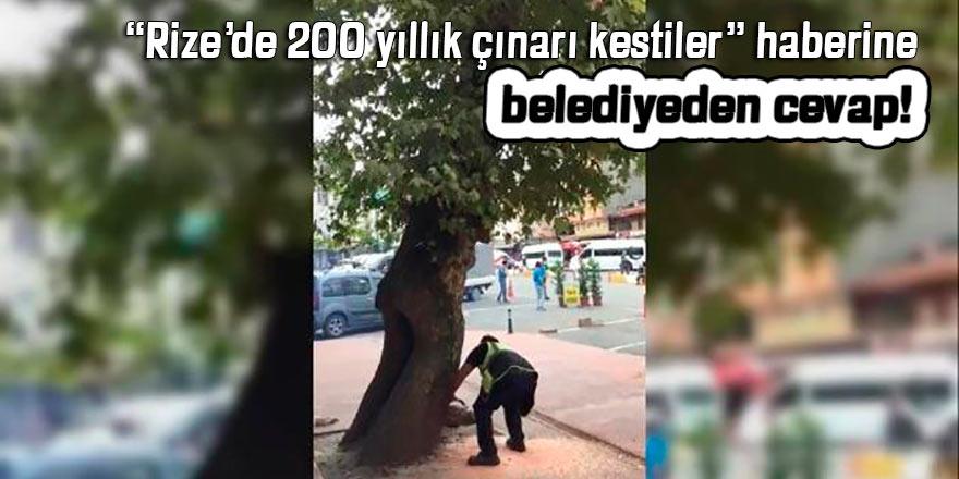 Rize'de çınar ağacının kesilmesi