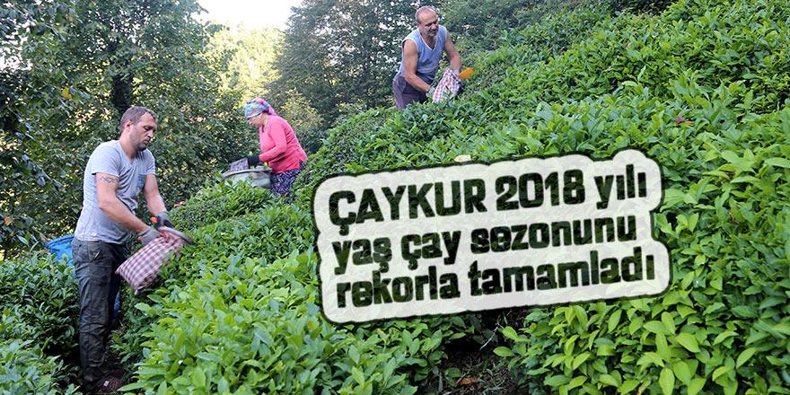 ÇAYKUR'un 2018 yılı yaş çay alımı rekorla tamamlandı