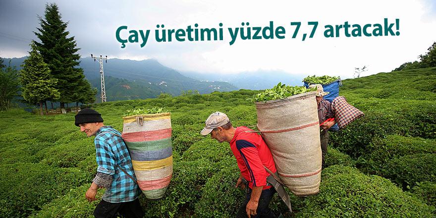 Çay üretimi yüzde 7,7 artacak!