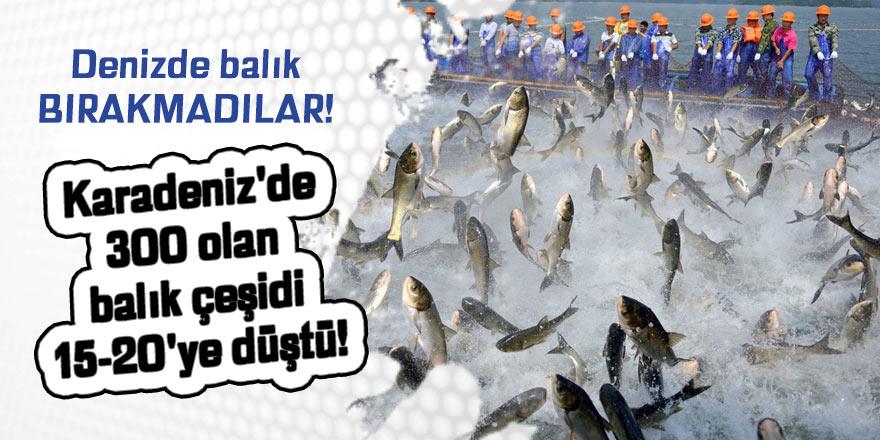 Karadeniz'de 300 olan balık çeşidi 15-20'ye düştü!