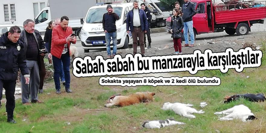 Sokakta yaşayan 8 köpek ve 2 kedi ölü bulundu