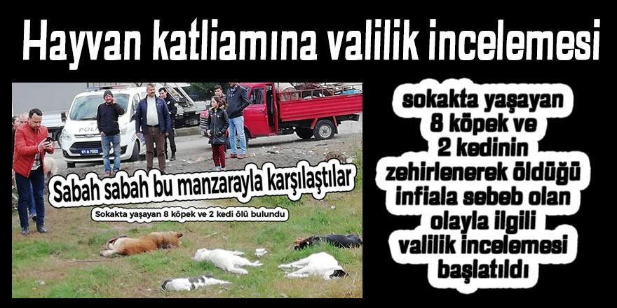 Hayvan katliamına valilik incelemesi