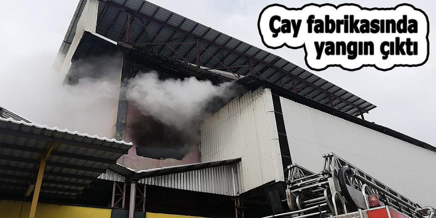 Çay fabrikasında yangın çıktı